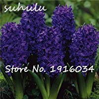 9:ホット販売50ピースリアルヒヤシンス種子グリーン植物(ないヒヤシンス電球)育てるのは簡単盆栽バルコニーフラワーシード用ホームガーデン