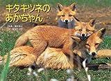 キタキツネのあかちゃん (親と子の写真絵本 (3))