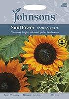 JOFL 英国ジョンソンシード Sunflower Copper Queen F1 サンフラワー・コッパー・クイーン・F1