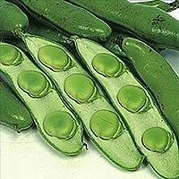【メール便配送】国華園 野菜たね マメ お多福そら豆 1袋(25ml入)【※発送が国華園からの場合のみ正規品です】