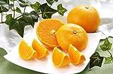 ほんまもん屋 せとか (柑橘類) L-3Lサイズ 約5kg