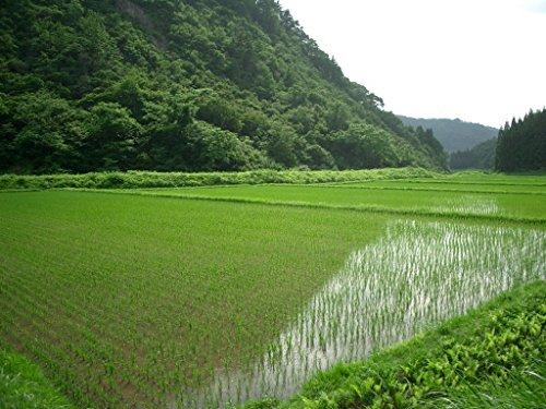【精米】会津産 無洗米 コシヒカリ 平成28年産 5kg