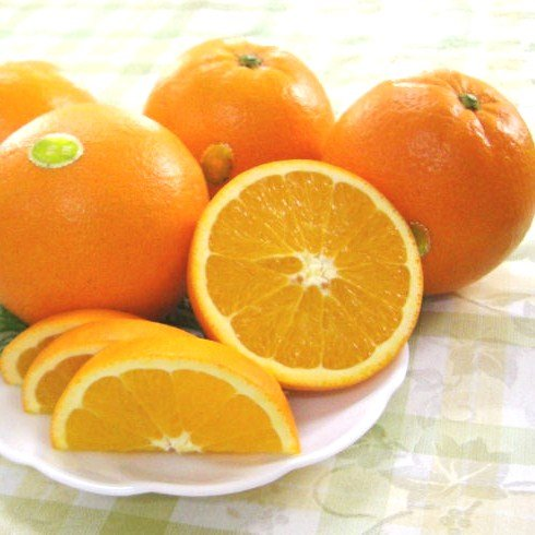 【訳あり 家庭用】 和歌山県産 ネーブルオレンジ 2.5kg