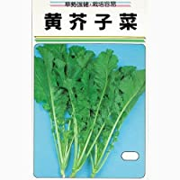 葉菜類 種 黄芥子菜1dl 小袋(約1dl)