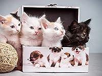芸術はポスターを印刷します - 子猫箱もつれ - キャンバスの 写真 ポスター 印刷 (70cmx50cm)