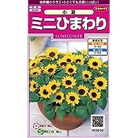 サカタのタネ 実咲花5630 ミニひまわり 小夏 00905630