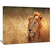 デザインアートpt12946–20–12Relaxingのライオンの草原–Africanキャンバスアートワーク、、20x 12