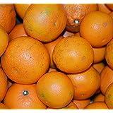 訳あり 清見オレンジ きよみ 和歌山県産 ご家庭用 10kg