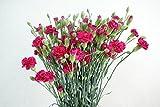 プリティマーメイド 生花 切花 切り花 SPカーネーション ローズリバー ロP など 5本
