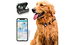PETFON Pet GPS Tracker, No Monthly Fee, Real-Time Tracking Collar Device, APP Control for Dogs and Pets Activity Monitor (Only Dog Tracker)