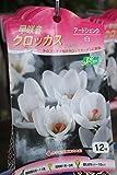 秋植え球根 早咲きクロッカス12球入り アードシェンク(白) 2袋セット  送料込
