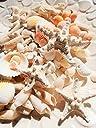 ミニヒトデ 白いサンゴ色々な貝殻セット ナチュラルインテリアハワイ 手作り素材