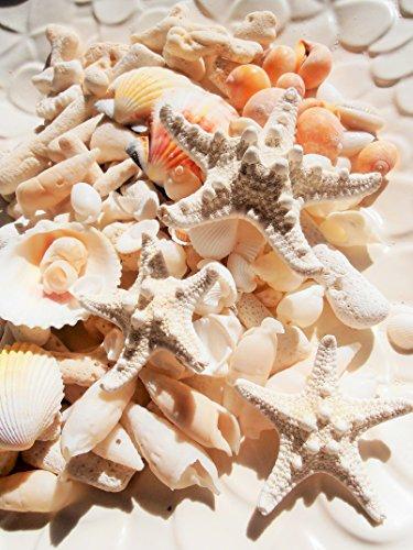 ミニヒトデ、白いサンゴ色々な貝殻セット ナチュラルインテリア...