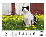 岩合光昭のねこ週めくりカレンダー2019 ([カレンダー]) 画像