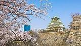 4K さくら HDR 春を彩る 華やかな桜のある風景 [Ultra HD Blu-ray] 画像