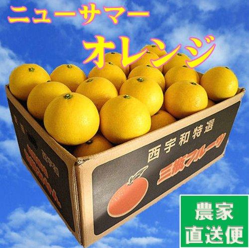 日向夏 9kg(訳あり・家庭用)ニューサマーオレンジ 農家直送 別名 小夏 ひゅがなつ ニューサマーオレンジ