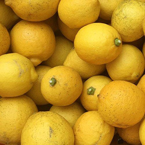 【国産・防腐剤不使用・ノーワックス】広島県 大長産レモン / 瀬戸内レモン(規格外) 3kg