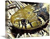 "「Checkeredガーター蛇の頭の壁アートプリントbyデザインPics 48"" x 32"" 5287357_5_thickbox"