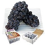 フルーツ ぶどう 青森県産 スチューベン 約2kg 5?10房 葡萄 ブドウ ニューヨーク(gn)