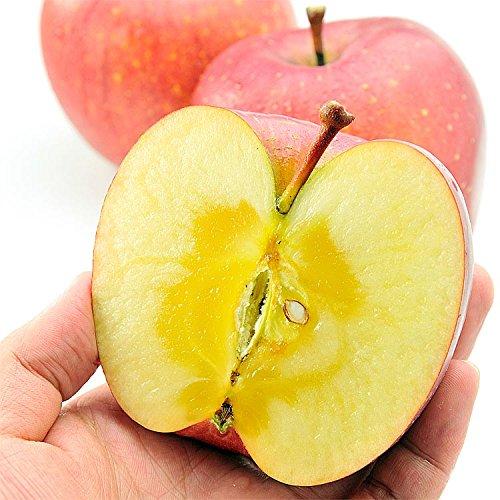 果物 ギフト 長野県産 サンふじ りんご 1箱 2.5kg 糖度センサー選別