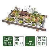 盆栽・盆景 薪割り(L)