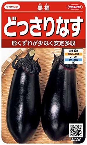 サカタのタネ 実咲野菜0200 どっさりなす 黒福 00920200