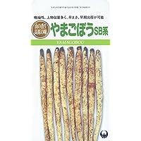 日本タネセンター SB系山牛蒡 (山牛蒡) 10ml