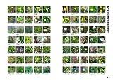 雑草と楽しむ庭づくりーオーガニック・ガーデン・ハンドブック 画像