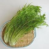 水菜(ミズナ) 約150-200g 福岡産