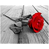 Red Rose Paint by Numbers for Adults Beginners Easy Flowers Canvas Painting Kit