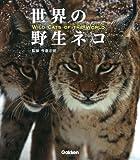 世界の野生ネコ 画像