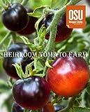 【SEED】Blue Tomato INDIGO ROSE ブルートマト・インディゴ・ローズ (20 seeds)*世界初の高アントシアニン・ブルートマト、『INDIGO インディゴ・シリーズ』 *営利登録&栽培契約品種
