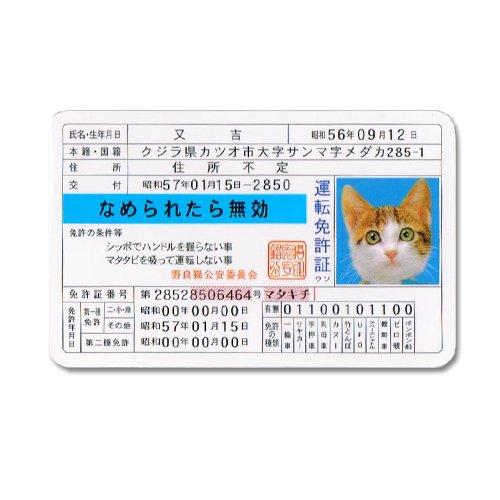 【雑学】免許証番号の末尾は失効回数
