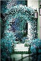 SEEDS:20個珍しい植物盆栽ジャスミンの花の香りアメージング&美しい香りの花植物の装飾ホームガール:D
