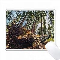 セコイア国立公園の丘の上にあるレッドウッドの木々 PC Mouse Pad パソコン マウスパッド