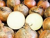 玉ねぎ 無農薬・有機JAS栽培 サイズ混合 10kg(北海道 自然農法の会)