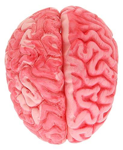 C-Princess ハロウィン 血液脳 脳みそ 装飾 飾り デコレーション リアル 不気味 グロ ホラー 恐怖 グッズ 小道具 学園際 文化際 パーティー 14*11cm