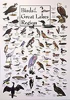 五大湖の鳥たち Birds of The Great Lakes Region silk fabric poster シルクファブリックポスター 120cm x 80cm
