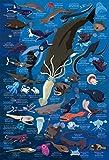 300ピース ジグソーパズル めざせ! パズルの達人 深海生物図鑑 水深1000m~4000m(26x38cm) 画像