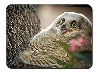 鳥、かわいいフクロウ、木 パターンカスタムの マウスパッド 動物 (26cmx21cm)