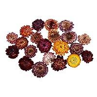 Baosity 乾燥した 押し花 自然 デイジー クラフト用品 アートペーパー製作 20g