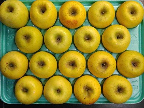 【訳あり】長野 減農薬 シナノゴールド 約4.5kg 8〜25個入 りんご リンゴ 小山