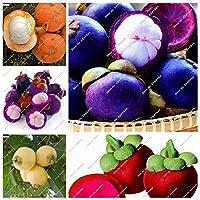 100個/バッグ盆栽マンゴスチン果物鉢植えオーガニックガーベリーフルーツツリー植物栄養豊富な庭トロピカルフルーツ:混合