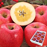 山形県産 りんご 高徳 こうとく 約2kg 6~9玉入り 秀品 50箱限定 幻の蜜入り林檎
