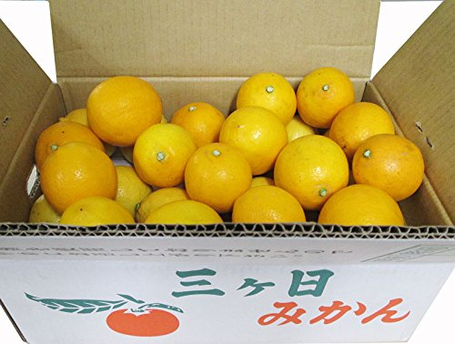 マイヤーレモン5kg A品 国産 静岡県産・三ケ日・ノーワックス