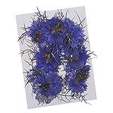 Fityle 鮮やか花 魅力的 押し花 12枚 素材 全2色 ドライフラワー - ブルー
