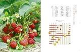 季節の果物でつくるジャムとレシピの本: 手づくりだから出来るお好みの色、味、香り 画像