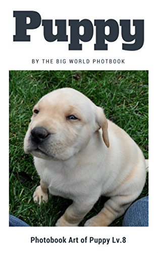Puppy by The Big World Photobook : Photo book dog, Dog photography,The Dog,My Dog,Cats,Dog,Cat Dog,Black Cat,White Kitten,Cat Memes,Black Kitten,Kittens,Kitten ... (Photobook Art of Puppy 8) (English Edition)
