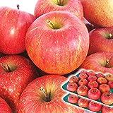 青森県産 りんご 10kg箱 ご家庭用 送料無料 4589677184443