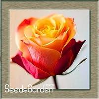 2:熱い販売!ホワイトハートピンクサイドローズ種子50個/バッグ24色利用可能な植物鉢植えバラ珍しい花の種バルコニー、#Euuzif